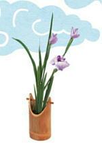 菖蒲の花 端午の節句