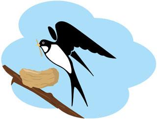 燕の巣作り