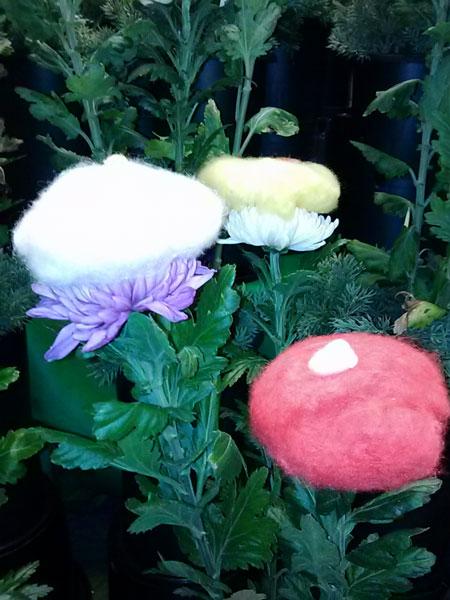 重陽の節句 菊の節句 菊の被綿